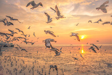 Birds Flying Over Beach During Sunset