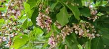 Hony Bee Green Trees Flowers Image
