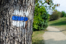 Blue Tourist Sign On A Tree. Detail Of Touristic Marking On Hiking Trails. Marks Painted On The Tree Trunk.