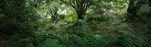 Breathtaking View Of The Scottish Rainforest. Mighty Trees, Moss, Plants, Fern Close-up. Crinan Canal, Argyll And Bute, Scotland, UK. Dark Atmospheric Landscape. Travel Destinations, Tourism, Nature
