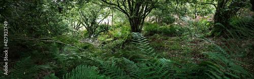 Fotografia, Obraz Breathtaking view of the Scottish rainforest