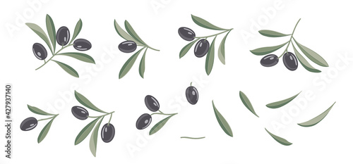 Fototapeta Set of differents olives branch on white background. Line art style with transparent background. obraz