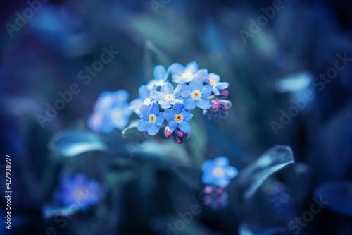 Wiosna w ogrodzie - fototapety na wymiar