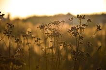 Close-up Macro Photo Photography Yellow Sunset Nature Plant Spring Summer Autumn