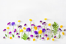 Beautiful Pansy Violet Summer Flowers Flatlay On White