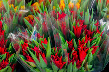 Bunch Of Vibrant Red And Orange Tulips In Plastic Wrappings At Local Florists Market