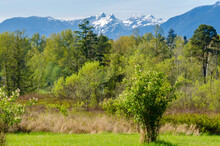 Trail Through Lush Green Forest With Snow Mountain At Background In Deer Lake Park, Vancouver, Canada.