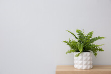 Beautiful Fern In Pot On Wooden Table, Space For Text
