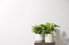 Beautiful Ferns On Grey Table Against White Background, Space For Text