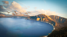 Flock Of Pelicans Flying Over A Crater Lake, Oregon, USA