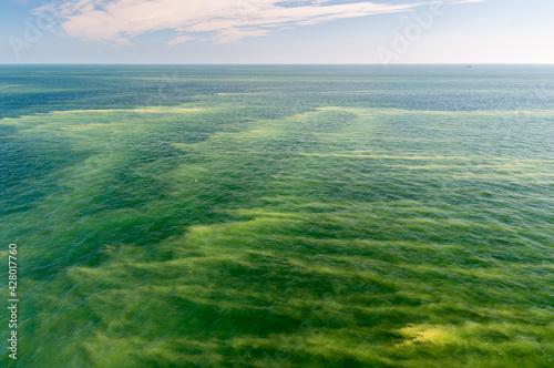 Obraz Kwitnące sinice w Morzu Bałtyckim / Blooming cyanobacteria in the Baltic Sea - fototapety do salonu