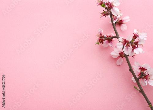 Photographie pink cherry blossom