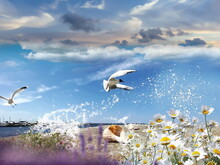Seascape Seagull And Seashell , Sea Water Blue Sky White Clouds  And Ocean Summer Nature Landscape