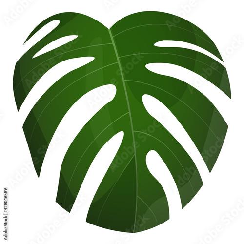 Fototapeta Roślina tropikalna. Botaniczna ilustracja zielonego egzotycznego liścia. Monstera. obraz