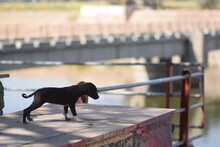 The Dog On The Bank Of The River