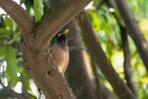 Slika na platnu A glorified bird perched on a large branch.