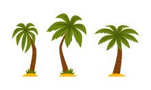 Palm Tree As Tropical Plant With Trunk Rested On Sand Vector Set