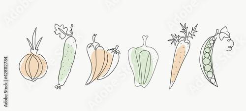 Fototapeta Line art vegetables. One line drawings. Vector graphics. Isolated background. obraz