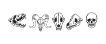 Hand Drawn Vector Abstract Stock Flat Graphic Illustrations Collection Set With Logo Element Of Magic Skulls Of Animals And Human,line Art In Simple Style For Branding,isolated On White Background