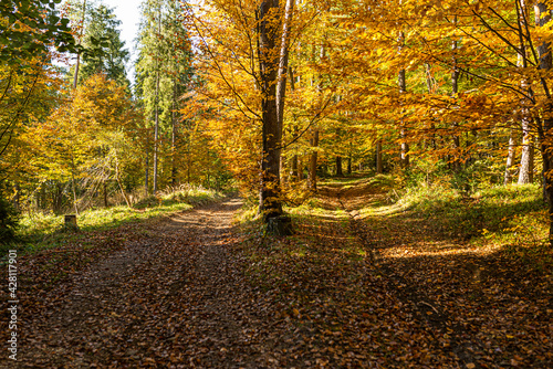 Path in autumn forest in polish moutains.