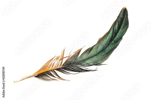 Fotomural black feathers of a rooster on a white isolated background