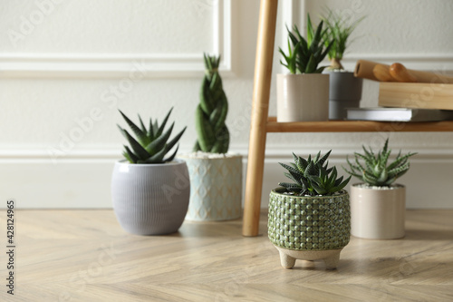 Beautiful potted plants near white wall, space for text. Floral house decor - fototapety na wymiar