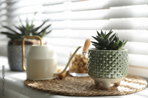 Fotografie, Obraz Beautiful potted plant on windowsill, space for text