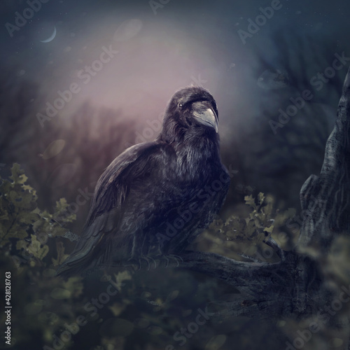 Naklejka premium Black raven