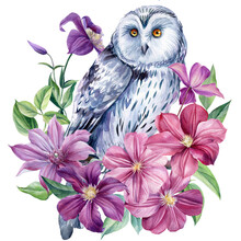 White Owl And Flowers On An Isolated White Background. Watercolor Illustration, Poster With Owl Decorated With Clematis