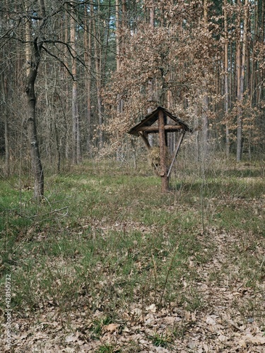 Fototapeta A place for feeding wild animals in the early spring forest obraz na płótnie