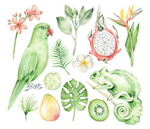 Set Of Tropical Leaves,flowers,fruit,bird And Animal.Exotic Leaves.Paradise