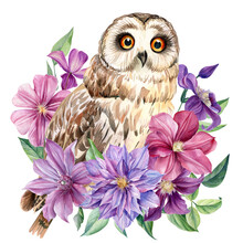 Composition With Owl And Pink Flowers On An Isolated White Background. Watercolor Illustration