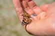 Piękny motyl wiosna lato ręka dłonie z motylem