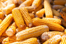 Corn Cobs Harvest On The Farm Close Up. Agricultural Business