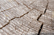 Leinwandbild Motiv Jahresringe rissiges Holz