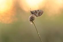 Farfalla Su Un Fiore Al Tramonto