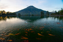 Morning Athmosphere With The Beautifull Sumbing Mountain Reflection And Koi Fish Motion. This Photo Location At Embung Kledung, Temanggung Indonesia. This Picture Looks Like Fuji Mountain At Japan
