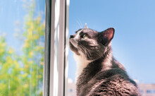 Cat Sits In Front Of An Open Window And Looks Somewhere