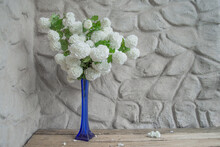 White Viburnum Flowers Snowball In A Tall Thin Blue Vase On A Wooden Deck Against A Background Of A Plastered Wall. Kalina Boule De Neige.