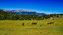 Close View Of A Group Of Horses Grazing In A Green Meadow With The Mountains Behind At San Martin De Los Andes, Neuquen, Argentina.