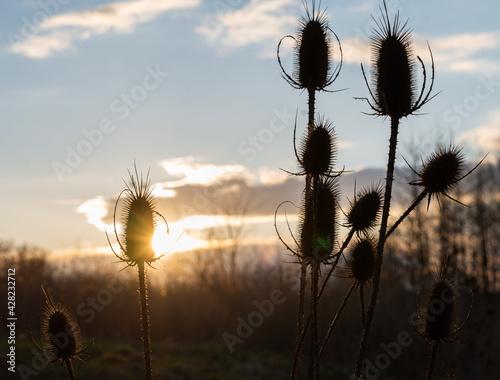 Fototapeta ostry krzak w odcieniach zachodzącego słońca obraz