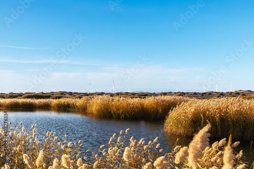 Obraz na plátně reed marshes landscape with wind farm