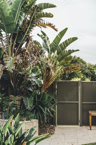 Billede på lærred Beachside backyard with palm trees and colorbond fence