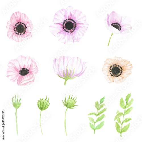 Fotomural watercolor hand drawn anemone flower elements