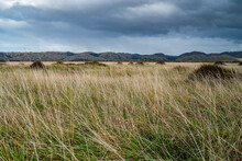 Landscape Of Tall Grasses In The Field Under A Gloomy Sky