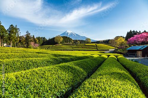 富士市大渕笹場から朝日を浴びて緑色に輝く新茶の目と青空に映える富士山 Fototapete