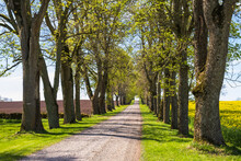 Beautiful Tree Lined Road In The Country At Spring