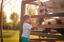 A Little Boy Excited About Horses In The Stable. Farm, Countryside, Summer