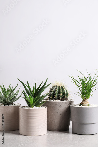 Different house plants in pots on grey table against white background, space for text - fototapety na wymiar
