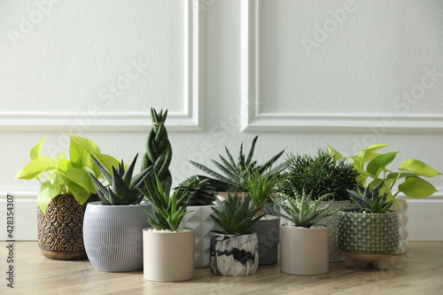 Many different potted plants on floor near white wall. Floral house decor - fototapety na wymiar